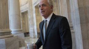 Corker says he won't oppose Democrat seeking his Senate seat