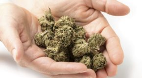 The Biggest Challenge for Pot Stock Investors Isn't Prohibition