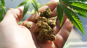 3 Reasons the Illicit Marijuana Market Won't Be Marginalized